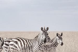 肯尼亚旅游【11-12月肯尼亚狂野10天精彩之旅】全国联运