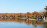 【国庆】厦门到日本东京富士山+箱根京都奈良大阪6日-厦门国旅