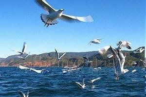 【11月】厦门到云南丽江+泸沽湖小包团4飞5日游_厦门国旅