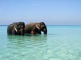 【12月】厦门到泰国象岛+曼谷芭提雅七日_厦门国旅