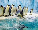 【11-12月】厦门到广州长隆动物世界海洋王国四日-厦门国旅