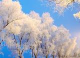 【1月】厦门到吉林雾凇 /长白山/哈尔滨雪乡/亚布力双飞6日