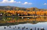 【9-10月】厦门国旅到杭州双动3日游-枕水江南