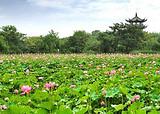 【3月】厦门到杭州西湖+西溪湿地+西塘+乌镇三日游-厦门国旅