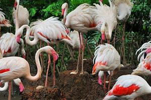 【5-6月】厦门到广州长隆动物园+飞鸟乐园双动3日_中国国旅