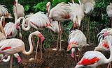 【暑假】厦门到广州长隆水上乐园+动物园飞鸟乐园三日-厦门国旅