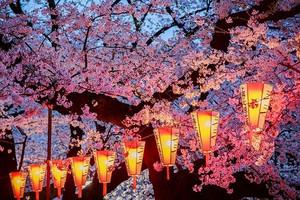 【3月】厦门到日本东京箱根京都奈良大阪6日_厦门国旅