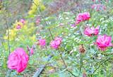 【4月】玫瑰小镇,情人谷探幽,玫瑰园赏花,滑沙,划船1日游
