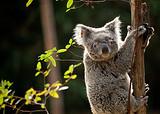 【暑假】厦门到广州水上乐园+动物世界+飞鸟乐园三日-厦门国旅