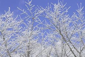 【12月】厦门到东北哈尔滨+亚布力+雪乡双飞5日游_厦门国旅