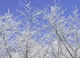 【11-12月】厦门到东北雾凇滑雪长白山雪乡亚布力6日游