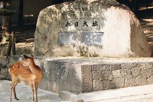 【暑假】厦门到日本东京富士山京都奈良大阪全景7日游_厦门国旅