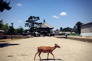 【暑假】厦门到日本东京/富士山/奈良/大阪双飞6日游厦门国旅
