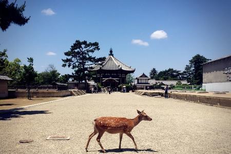 【暑假】厦门到日本东京/富士山/京都奈良大阪6日游_厦门国旅