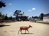 【2月】厦门到日本大阪京都箱根富士山东京6日游_厦门国旅