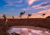 【4月9日】厦门到澳洲新西兰凯恩斯+布里斯班13天_厦门国旅