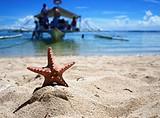 【除夕】厦门到菲律宾宿务+薄荷岛轻奢6日游_厦门国旅