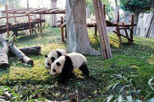 【5月】国旅厦门到成都+大熊猫+黄龙+九寨沟+都江堰双飞6日