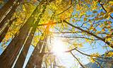 【11月】厦门到广东南雄银杏染秋+韶关丹霞山双动纯玩三日游