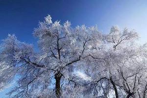 【1月】厦门到东北滑雪+雪乡自由行+寒地温泉5天_厦门国旅