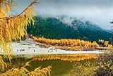 【11-1月】国旅厦门到成都+毕棚沟+达古冰川+鹧鸪山五日游