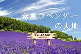 【暑假】厦门到日本北海道富良野+东京浪漫尊享6日游_厦门国旅