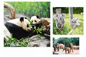 【寒假及春节】厦门到长隆动物世界+马戏飞鸟乐园3天_厦门国旅