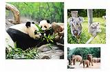 【独团】厦门到长隆动物园+水世界+飞鸟世界双飞三日-厦门国旅