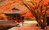 【11-12月】廈門到日本東京大阪輕奢半自助7日游_廈門國旅