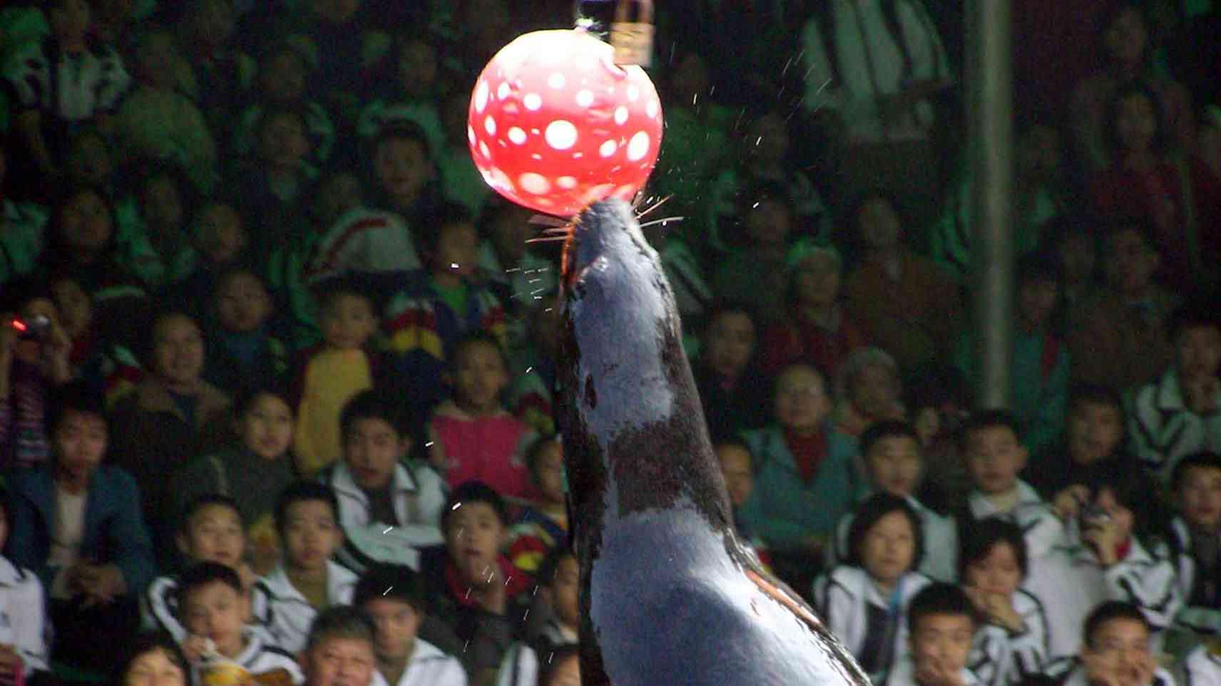 永川抵达欢乐聚集地——亚洲最大的野生动物园---【重庆野生动物世界