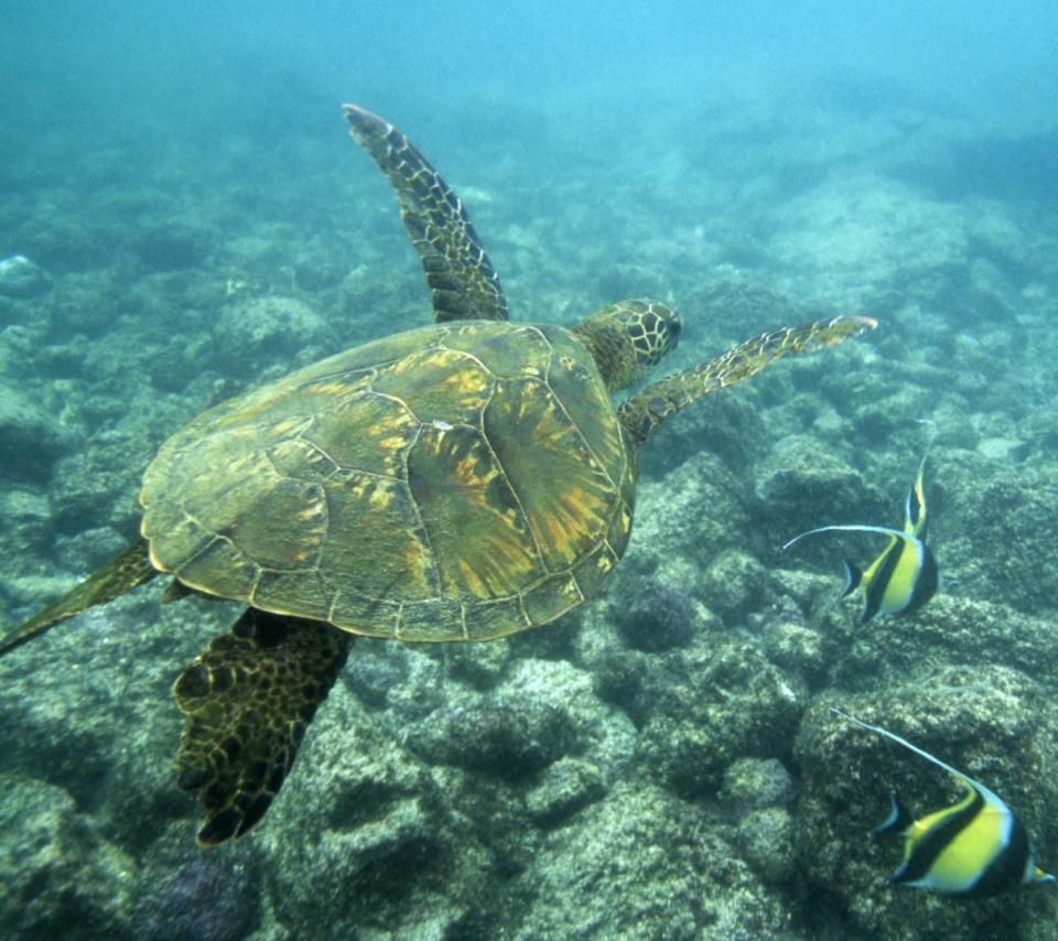 之后乘玻璃底船前往【海龟岛】.