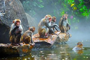 重庆到三亚双飞6日旅游<分界洲岛+蜈支洲岛+南湾猴岛>0自费