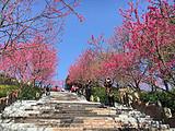 华安官畲村、永福樱花、平和高峰谷 汽车休闲二日游