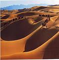宁夏B线:沙坡头、腾格里大漠景区、大漠奇石馆一日游