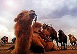 宁夏L线:越野车穿越腾格里大漠一日游