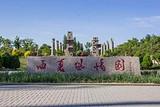 宁夏银川出发至西夏风情园、影视城、贺兰山岩画+枸杞园1日游