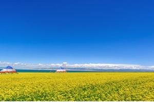 宁夏银川出发至青海湖、茶卡盐湖、塔尔寺3日游