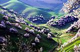 预售【T·杏福疆来 新疆双飞6日游】新疆最美四月天震撼来袭