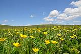 亲子环线丨鄂尔多斯响沙湾、黄花沟、辉腾锡勒草原 3日游