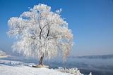 郑州到东北|魅力哈尔滨、激情亚布力滑雪、童话世界雪乡双卧7日