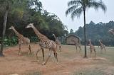 郑州到广东、长隆动物园、欢乐世界 纯玩双卧4日游