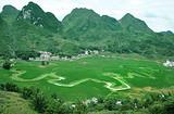 散客天天发:巴马百鸟岩,长寿村,仁寿山庄特色二日游