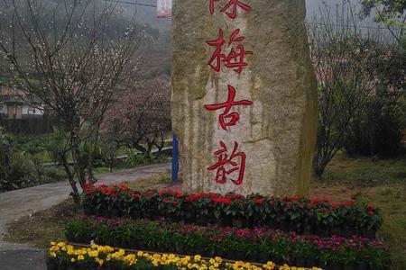 梅傲陈平-宾阳陈平赏南国梅花、宾州古城摄影休闲一日游