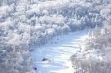 冰城哈尔滨、亚布力激情滑雪、中国雪乡、雾凇岛、魅力江城吉林双