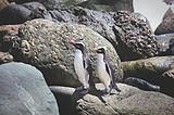新西兰南北岛8天纯净之旅
