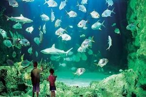 上海水族馆一日游【独立成团】