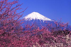 【早定立减】日本本州亲子4星品质5晚6日