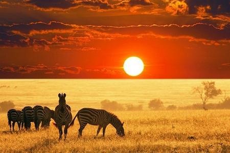 肯尼亚纳瓦沙湖、博高利亚湖、动物大迁徙6晚9日游