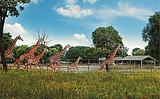 【上海】野生动物园一日游