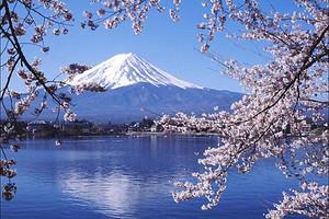 本州双古都富士山温泉特惠 6日游